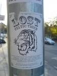 lost_celtic_tiger.jpg