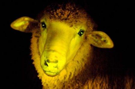 mouton-lumineux.jpg