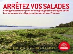 algues vertes,écologie