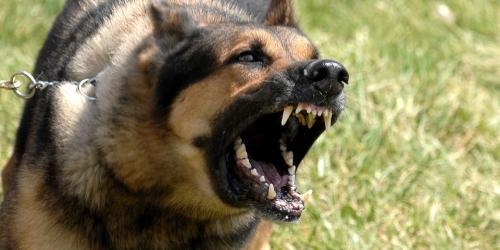 chiens-morsure-thumb.jpg