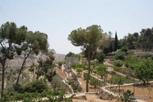 terre sainte,palestiniens,israël,netanyahu,mur