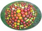 tomates[1].jpg
