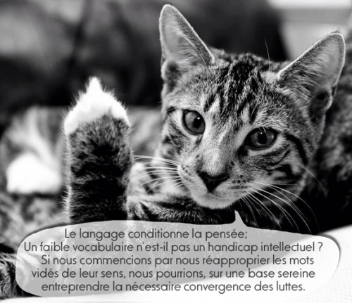 chat-che-sur2.jpg