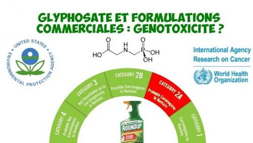 cancer-glyphosate-formulations-genotixicite-reduit.jpg