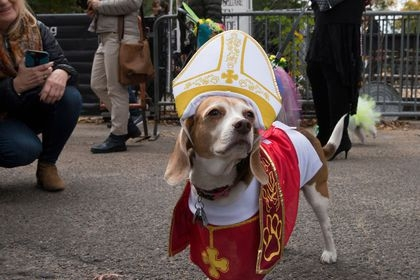 a-dog-dressed-as-pope-francis-poses-for-a-photograph-during-the-annual-tompkins-square-halloween-dog-parade-in-the-manhattan-borough-of-new-york-city_5452966.jpg