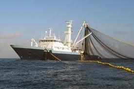 surpêche,écologie,halieutique