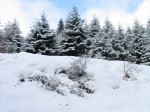 neige-sapins-gerardmer.1182397978[1].jpg