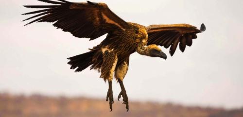 15781038-ces-fonds-vautours-dont-le-metier-est-de-ruiner-des-pays-pauvres.jpg