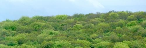 forêts,écologie