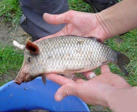 écologie,aquaculture,bio,europe