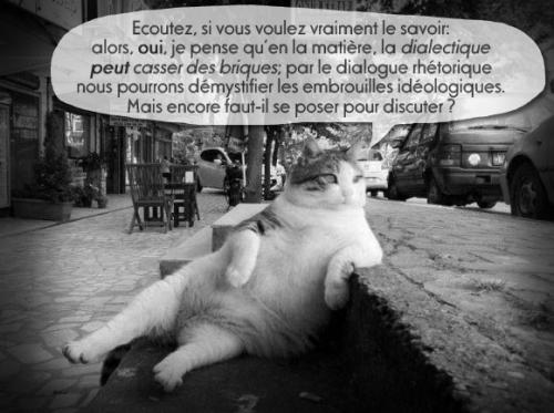 chat-che-sur.jpg