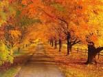 la_gueule_ouverte_automne_03[1].jpg