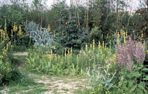 x510__banqueimages-andre_10598_parc-andre-citroen-jardin-en-mouvement-bisannuelles.jpg.pagespeed.ic.KdifXPMOV9.jpg